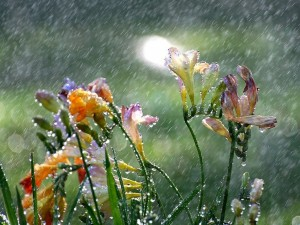 flowers_rain_drops_nature_21738_1280x960